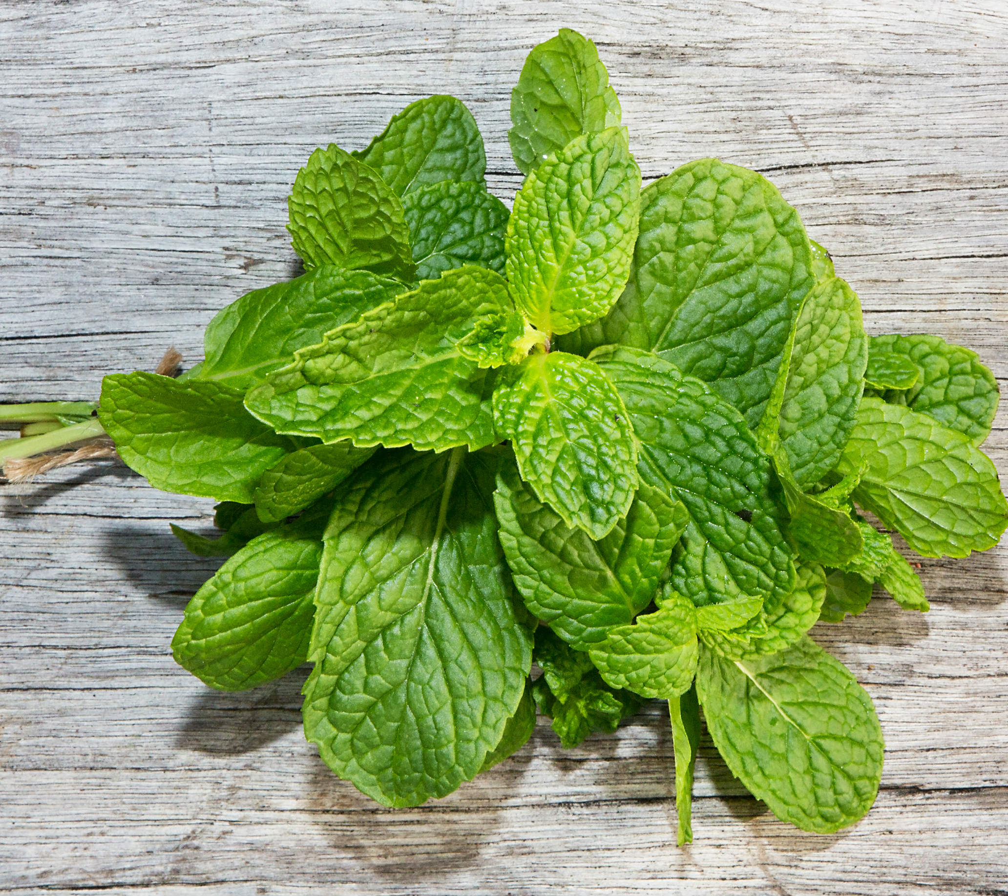 Mint herb a product of our catalog